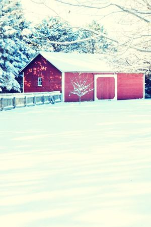 Winter afternoon Snow Winter Cold Temperature No People Rural Scene Built Structure Barn Architecture Outdoors Day Snow Day ❄ Snowwhite Michigain Cold Weather EyeEmNewHere