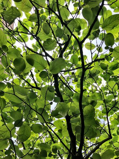 Leave roof Plant Green Color Growth Tree Leaf Full Frame Beauty In Nature Plant Part Nature No People Day Branch Backgrounds Tranquility Outdoors Freshness Low Angle View