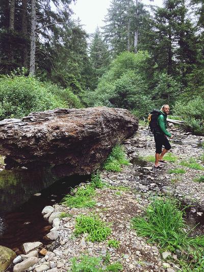 Rear view of man walking on rocks in forest