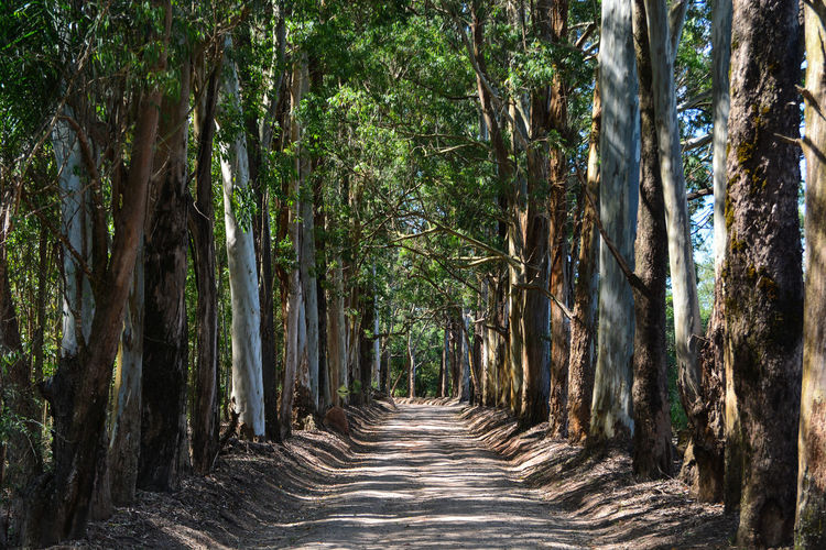 Walkway amidst trees in forest