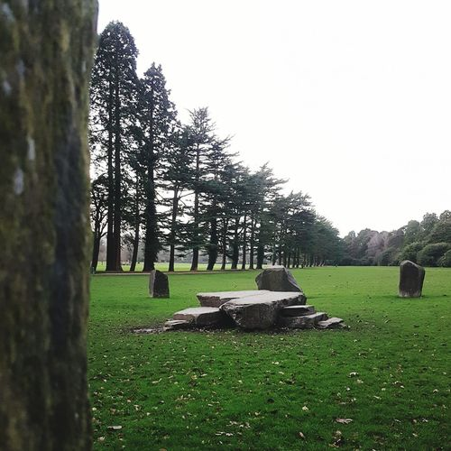 Terraced coppice Tree Grass Nature Growth Green Color Landscape Sky Beauty In Nature No People Outdoors Day Garden Stone Circle National Trust National Trust 🇬🇧 Tredegar House Newport Nature Grass Tree Stone Circle In Wintertime