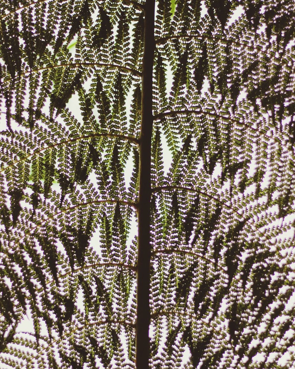 backgrounds, full frame, pattern, no people, close-up, textured, plant, growth, nature, day, tree, outdoors, beauty in nature