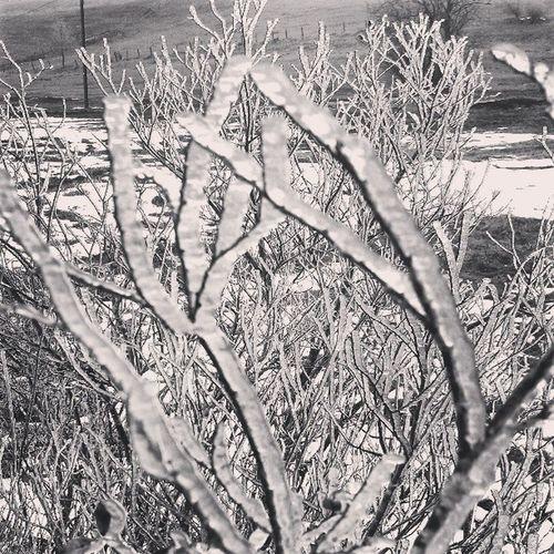 Eiszeit - gefrorener Reif