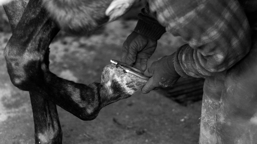Midsection of man attaching horseshoe on hoof