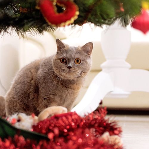 Close-up portrait of cat sitting on christmas tree