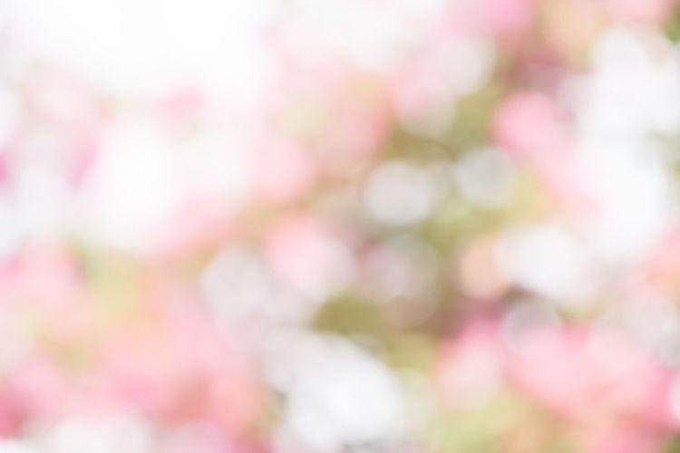 Defocused image of pink flowering plants