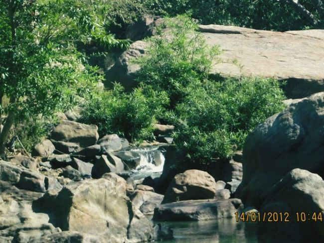 SeemaAndhraPradesh 2012 Indianforest Nature Water