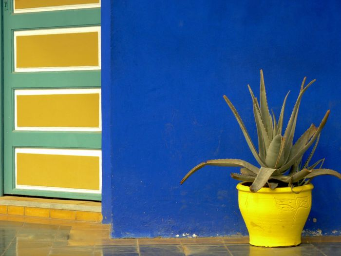 Majorelle Flower No People Day MoroccoTrip Majorellegardens Majorelle Bleu Trip Photo Eymen  Shootingphoto  EyeEm Best Shots - Nature Tranquility Architecture