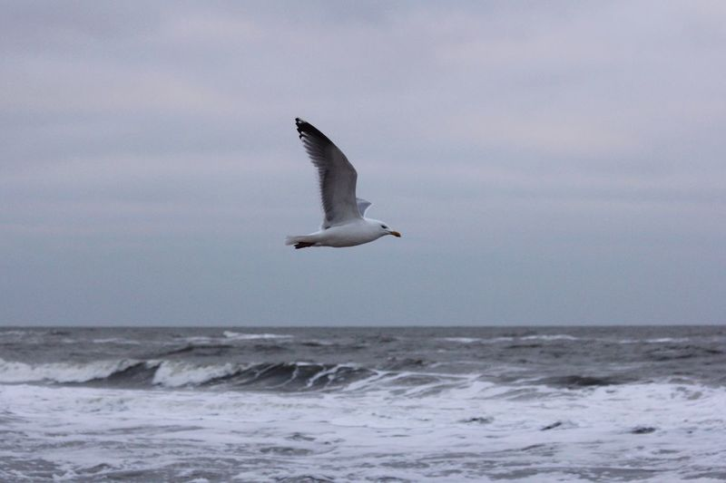 Fliegende Möwen SEAGULL IN FLIGHT Flying Bird Northsea Nordsee Nature Photography Beautiful Nature Sea Meer Waves, Ocean, Nature Walking Around Taking Photos Plattes Land Nordfriesland Tadaa Community EyeEm Nature Lover Tag Am Meer... Möwen Seagulls Seagull Am Meer Birds Bird At The Sea Whatever