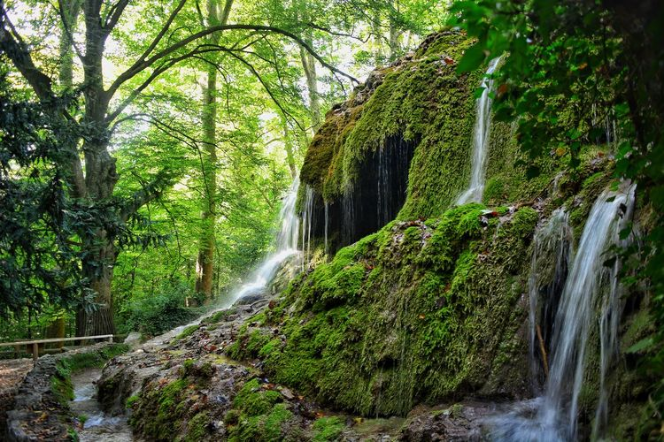Tree Water Forest Waterfall Motion Green Color Tranquil Scene Calm Tranquility Woods