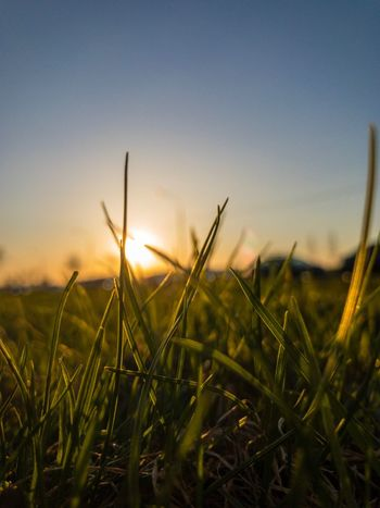 EyeEm Selects Sky Beauty In Nature Growth Plant Sunset Field Tranquil Scene Tranquility Landscape Scenics - Nature Environment Rural Scene Land Nature No People Sun Crop  Agriculture Sunlight Close-up
