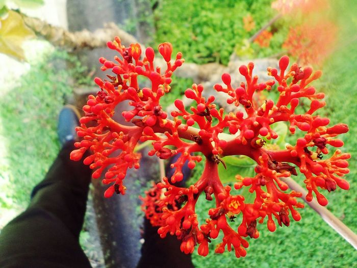 I ♡ nature Colour Of Life Nature Photography Backyardphotography Garden Home Is Where The Art Is Heart Shaped  Heart Shapes In Nature Red Flowers in Kwazulu Natal South Africa Perspectives On Nature Be. Ready. Inner Power