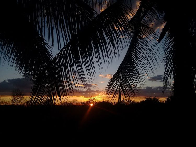 🌴🌞🌴 Sunset Sunset_collection Sunset Silhouettes Silhouette Nature Sky Beauty In Nature Tree March Naturelovers Simplicity Sky And Clouds Sky_collection Sunlight Sunset Silhouette EyeEm Gallery EyeEmBestPics EyeEm Best Shots EyeEm Nature Lover EyeEmNewHere Brazilian Gallery Brazil Brasil 🌴🌞🌴💋🌎✌