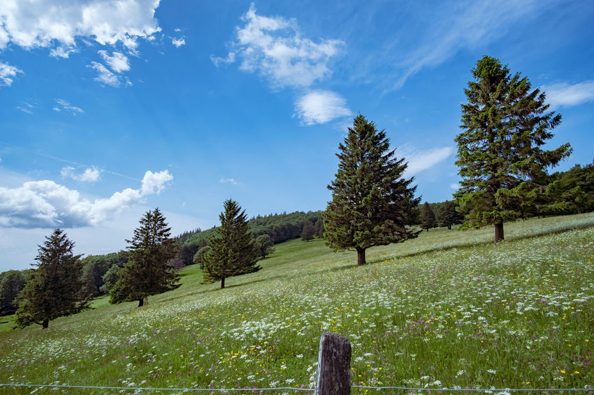 Tannenbäume auf einer Frühlingswiese Beauty In Nature Boundary Cloud - Sky Coniferous Tree Day Environment Field Grass Green Color Growth Land Landscape Nature No People Non-urban Scene Outdoors Pine Tree Plant Scenics - Nature Sky Tranquil Scene Tranquility Tree
