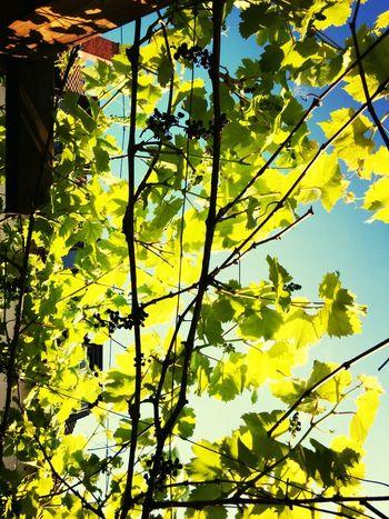 Heidelberg Wine Wine is coming.