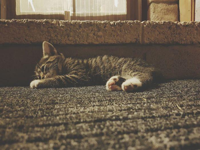 Cat resting on doormat