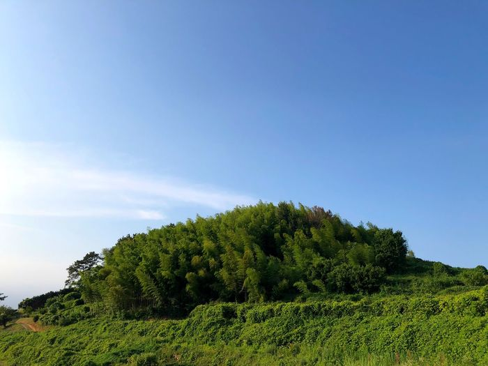 Trees growing on land against sky