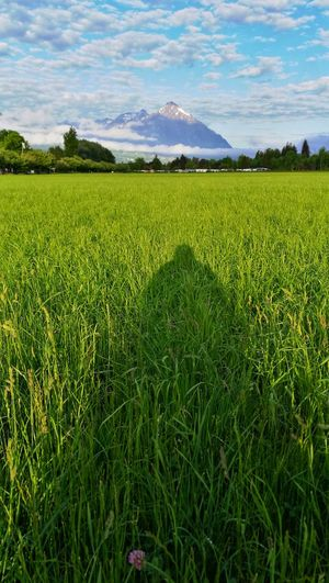 Self-Portrait with Niesen Grass Niesen Switzerland Berner Oberland Bernese Oberland Eye4photography  Interlaken Morning Morning Light Mountain Rural Scene Agriculture Field Farm Sky Landscape Cloud - Sky Agricultural Field Waking Up Grassland Countryside