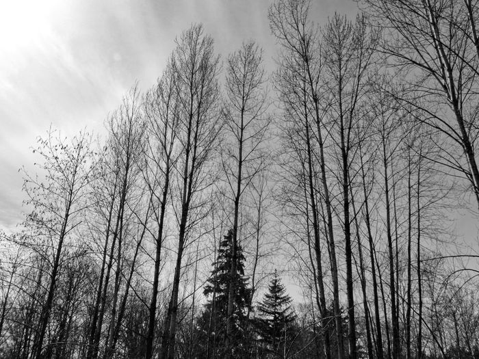 Blackandwhite Black And White Outdoors Trees Nature Naturephotography Tree Forest Sky Silhouette Outline Calm Bare Tree Branch Dead Plant