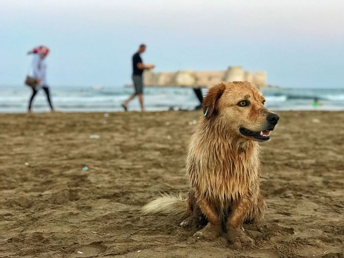 holiday sea and dog Animal Animal Themes Land One Animal Mammal Dog Beach Canine Pets Domestic Vertebrate Domestic Animals Water Nature Sky Sand Focus On Foreground Day Looking Outdoors