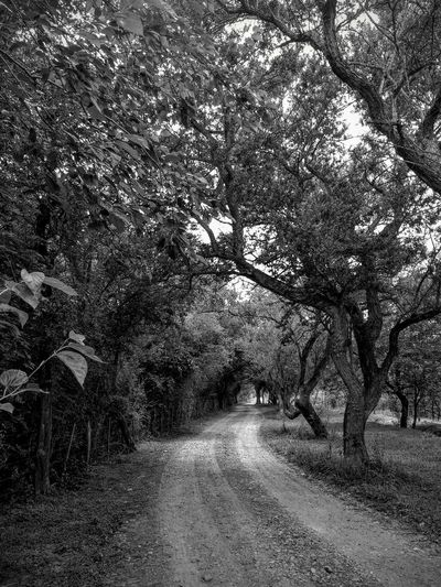Tree Nature No People The Way Forward Road Tranquility Outdoors vanishing point Land Branch Tranquil Scene Dirt Road
