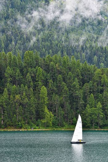 Sailboat sailing on tree in forest