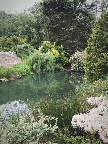 Kevinnakphoto Kubotagarden Seattlephotographer Seattle Garden Photography Flowers,Plants & Garden Japanese Garden