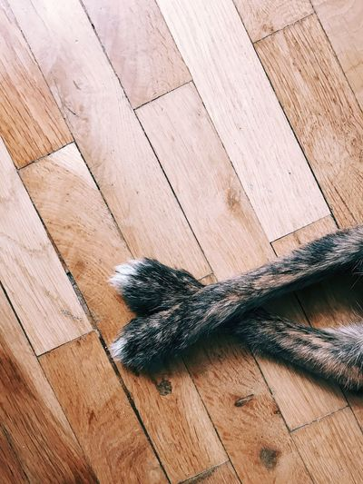 High angle view of lizard on hardwood floor