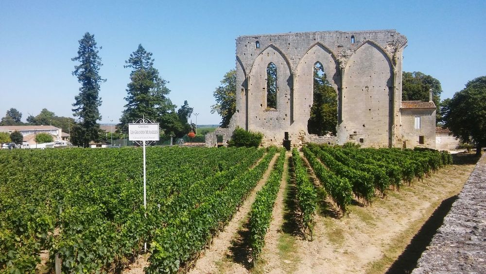 "Château ""Les Grandes Murailles"" - Saint-Émilion Wine Wine moments Winery Memorabilia Church Wine Winery Bordeaux Heritage France WineRed Grand Cru Tree Sky Agricultural Field Office Building Exterior Cultivated Land Agriculture Historic EyeEmNewHere"