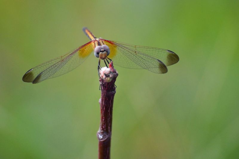 Dragon fly Insect Green Color Macro_collection Close-up Photooftheday Macro Photography Photography Photo Day Nature Wood - Material Wildlife Stem Twig Outdoors Animals In The Wild Insect Animal Themes Dragonfly One Animal Wildlife Animal Wing Focus On Foreground Close-up Stem