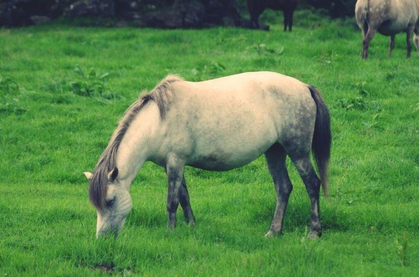 JEJU ISLAND  Horse Animals Jeju