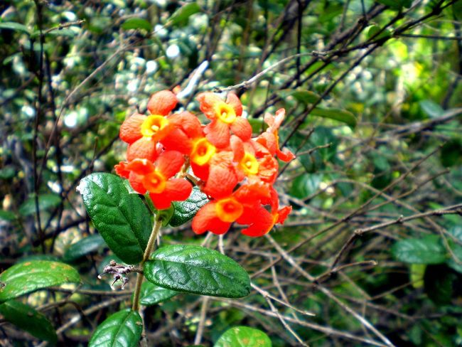 Flowers Mauritius