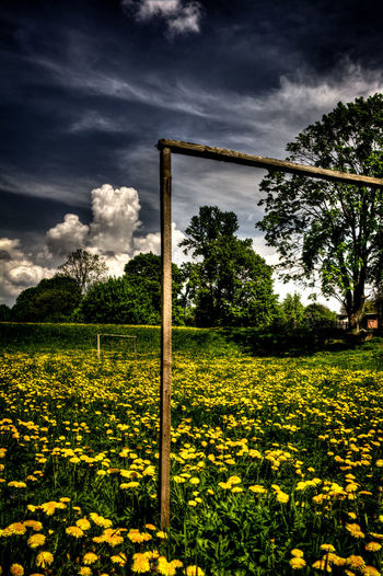 Old football field. Football Footballfield Flower Field Yellow Sky New Talents Landscape_photography Welcomeweekly Nature Photography Non-urban Scene Landscape No People The Week On EyeEm