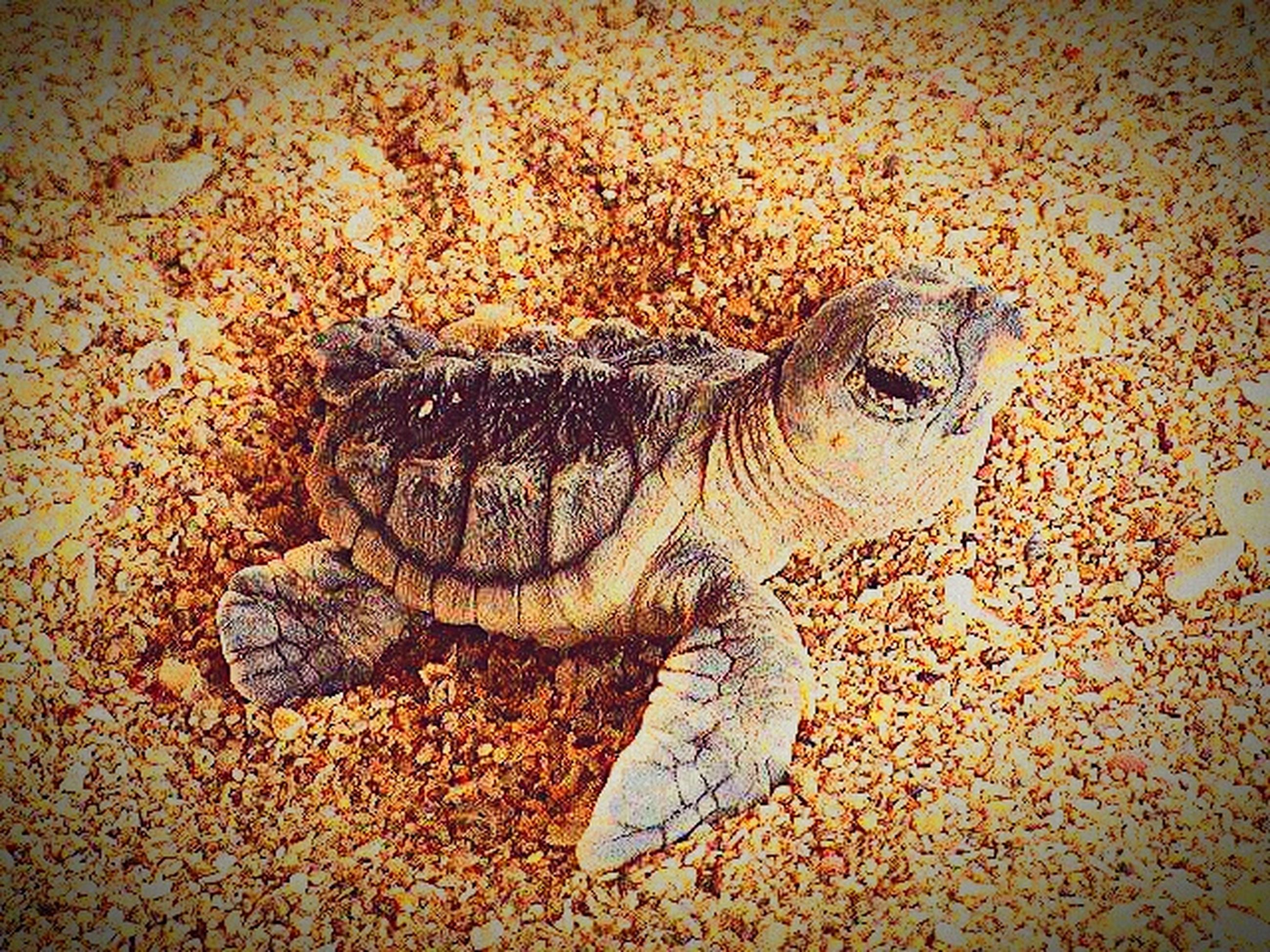 animal themes, one animal, animals in the wild, wildlife, high angle view, close-up, outdoors, no people, animal head, sand, day, sunlight, animal body part, nature, street, dead animal, full length, zoology, ground, side view
