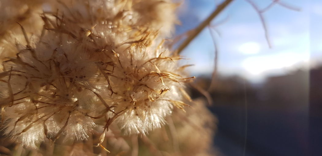 Nature Close-up Outdoors Day No People Plant Beauty In Nature Fragility Dendelion Warm Colors Be. Ready. EyeEmNewHere Crafted Beauty