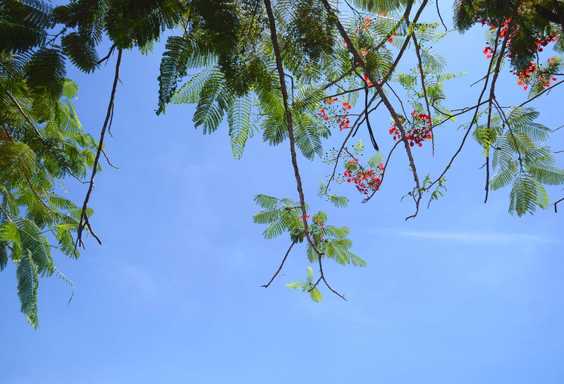Leaf and the Clear blue sky. Asian  Beauty In Nature Blue Borneo Branch Clear Sky Day Europe Flower Freshness Growth Hanging Istanbul Leaf Malaysia Nature No People Outdoors Quotes Russia Singapore Sky Tree Turkey Wording