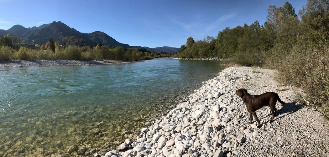 Afternoon walk at the river Isar River Labrador Dog Tree Nature Day Animal Themes Water Outdoors No People Sky One Animal Beach Mountain Beauty In Nature