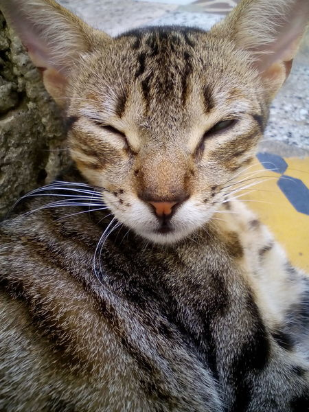 Enjoying a good morning . Paint The Town Yellow Animal Themes Close-up Day Domestic Animals Domestic Cat Mammal One Animal Pets Whisker