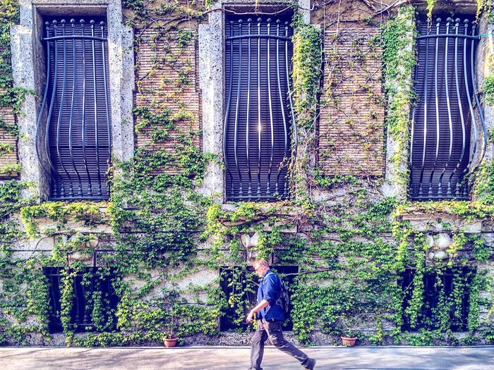 Spoton ☘️ Plant Growth Tree One Person Day Nature Real People Man Outdoors Architecture Milan Milano Italia Italy Building Exterior Built Structure Walking Around Walking Ivy Ivy Leaves Ivy Covered Green
