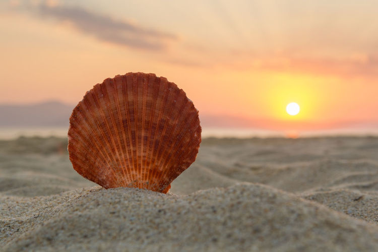 Sea shell on the sand at sunset Memories Romantic Summertime Travel Vacations Atmospheric Mood Backgrounds Beach Beauty In Nature Dreamlike Island Nature Sand Scallop Scenery Sea Seashell Shell Sky Summer Sun Sunlight Sunset Tranquil Scene Tranquility
