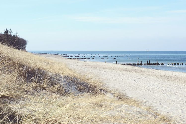Baltic Sea landscape of Darss peninsula (Mecklenburg-Vorpommern, Germany) in springtime. Baltic Sea Baltic Sea Winter Beach Coastline Darß Darß Dunes Footpath Germany Groyne Horizon Over Water Landscape Mecklenburg-Vorpommern Ocean Sand Sea Seascape Shore Vacations Water