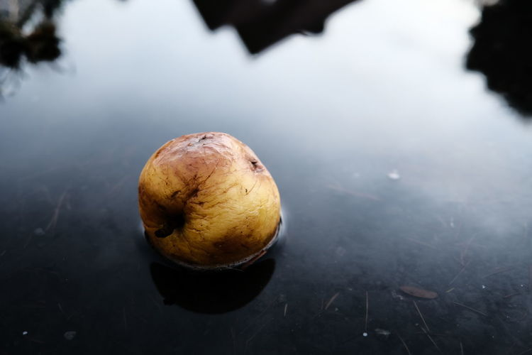 High angle view of lemon in lake