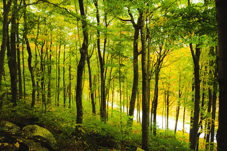 Into the wood -