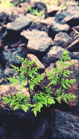 Taking Photos Mobile Camera Small Beauty Rock Gardens Weeds Are Beautiful Too Small Things Nature_collection Nature Beauty Garden Photography nature EyeEmNewHere