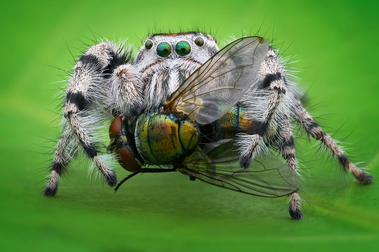 Close-up of spider and fly on leaf