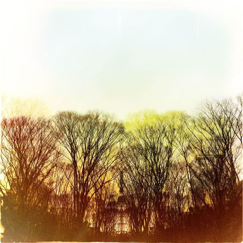 Trees on landscape at sunset