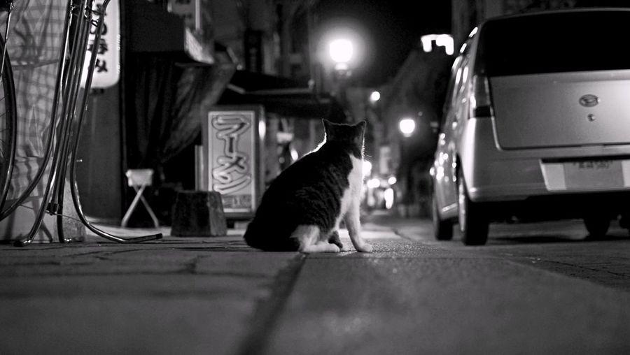 Finding Nagasaki Cat : Walking Around Tsukimachi, Nagasaki City Tonight Stray Cat On The Street Backshot When The Streets Have No Name / Sultry night feel like 30° The Street Photographer - 2015 EyeEm Awards