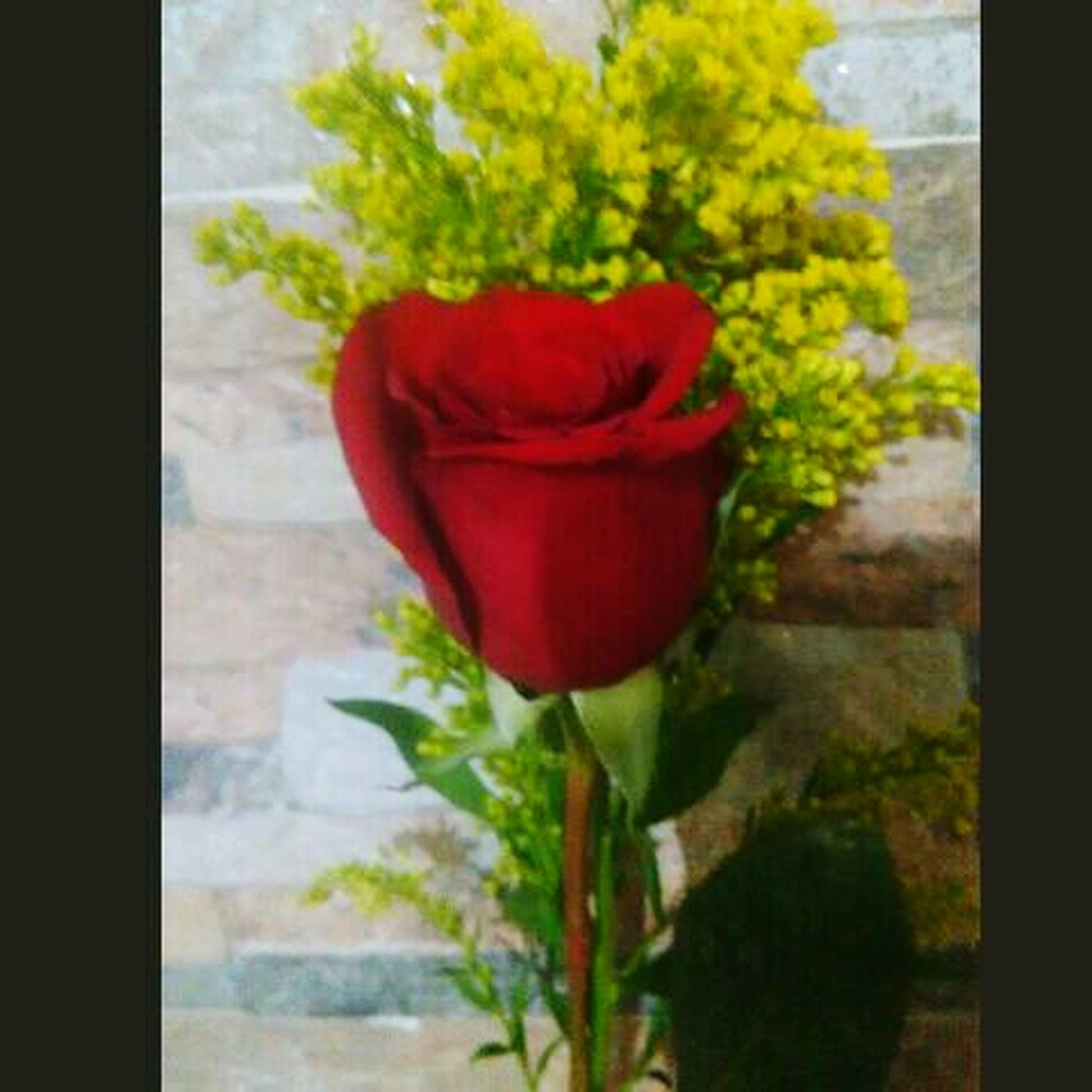 flower, red, beauty in nature, nature, freshness, no people, fragility, growth, plant, petal, close-up, day, tulip, flower head, outdoors
