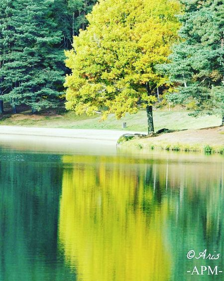 Tree Reflection Nature Water Tranquility Beauty In Nature Growth No People Tranquil Scene Yellow Lake Outdoors Green Color Day Scenics Smile Landscape Apm Tranquility Aris Philoxene Meyborn Francephotographer Photography Aris Limousin Nature