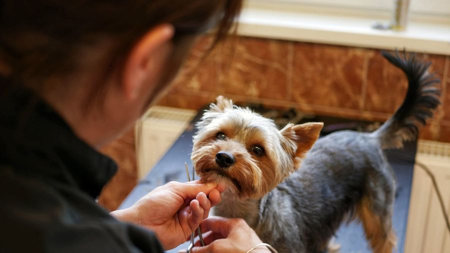 EyeEm Selects Nature Dog Barber Grooming Veterinary Veterinarian Vet  Cute Pet Animal Pet Photography  Dogs Of EyeEm Dogs